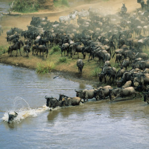 The Great Migration, Maasai Mara, Kenya