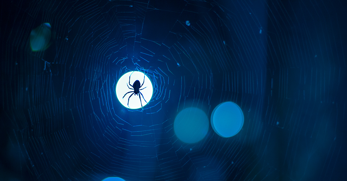 Casting the Dark Web in a New Light
